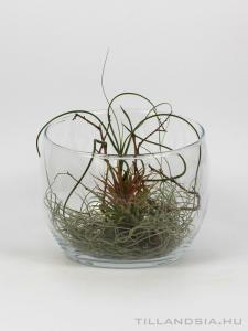 Air plant kompozíció - Do it yourself 01.