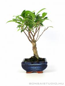Mini bonsai 02.
