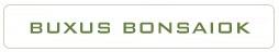 buxus harlandii hongkongi szobapuszpang belteri bonsai fak es cserjek a marczika bonsai studio webshop kinalatabol