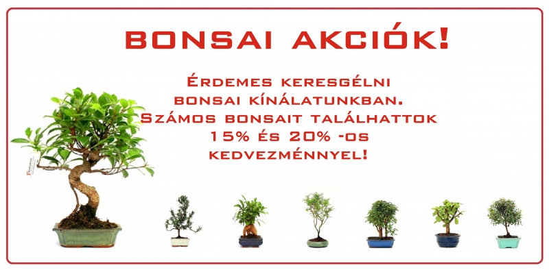 bonsai webaruhaz bonsai akcioja a marczika bonsai studioban