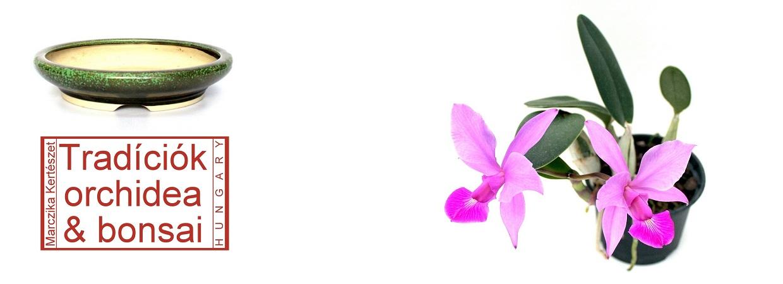 Tradíciók orchidea és bonsai