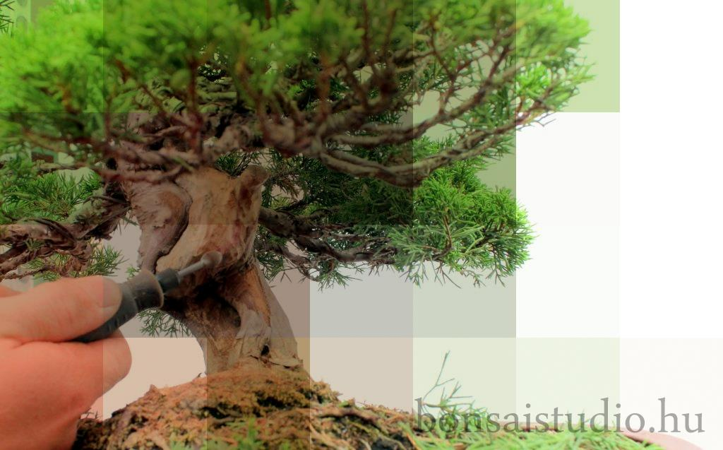 bonsai torzsenek gepi alakitasa shari es deadwood technika