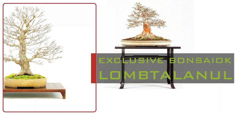 lombhullato exclusive es lomblevelu high quality bonsai collection kollekcio marczika studio