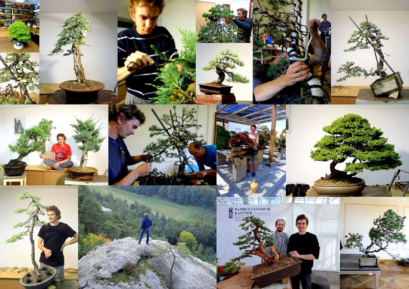 bonsai akira bonsai feeling and art