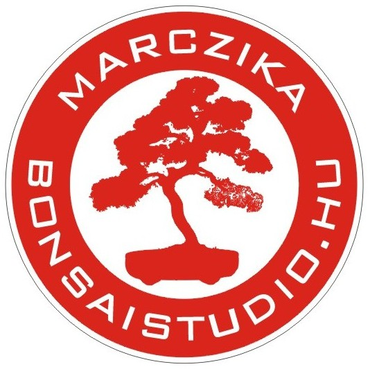 marczika bonsai kerteszet erd hungary bonsai studio