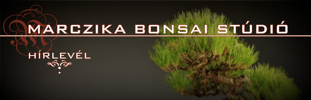 exclusive bonsaiok top quality bonsai es high quality bonsai a marczika bonsai kerteszet kinalatabol minosegi kulonleges bonsai fak vasarlasi lehetosege szallitasa