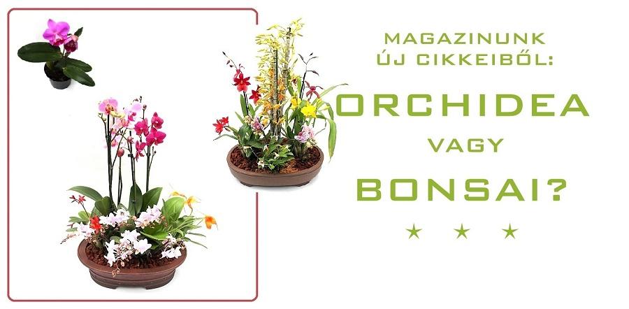 tradiciok orchidea es bonsai temaju cikk a japan orchideabonsaiokrol