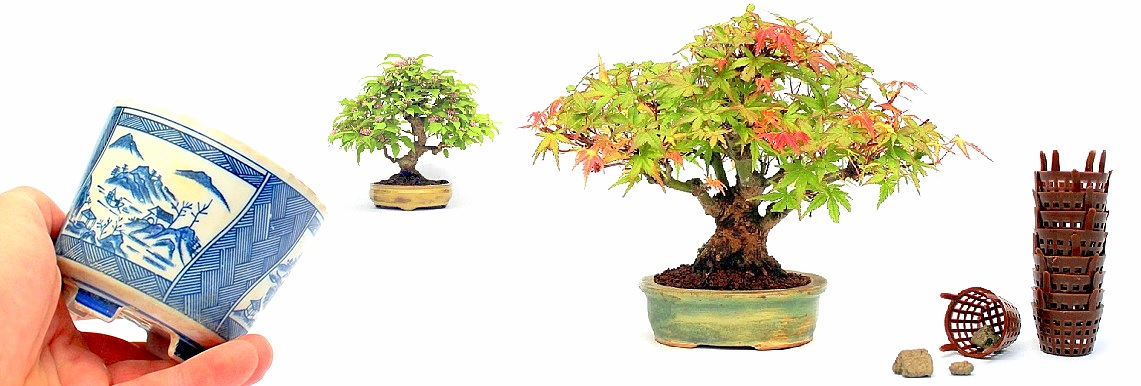 shohin bonsai fak a marczika bonsai studio bonsai kerteszetebol webaruhazabol