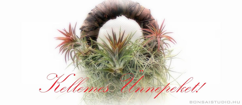Karácsonyi ajándékok vásárlása a Marczika kertészetben. Bonsai orchidea és tillandsia ajándék ötletek az ünnepekre.