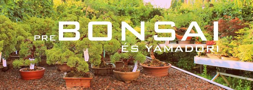 yamadori és pre bonsai gondozás nevelés tartás
